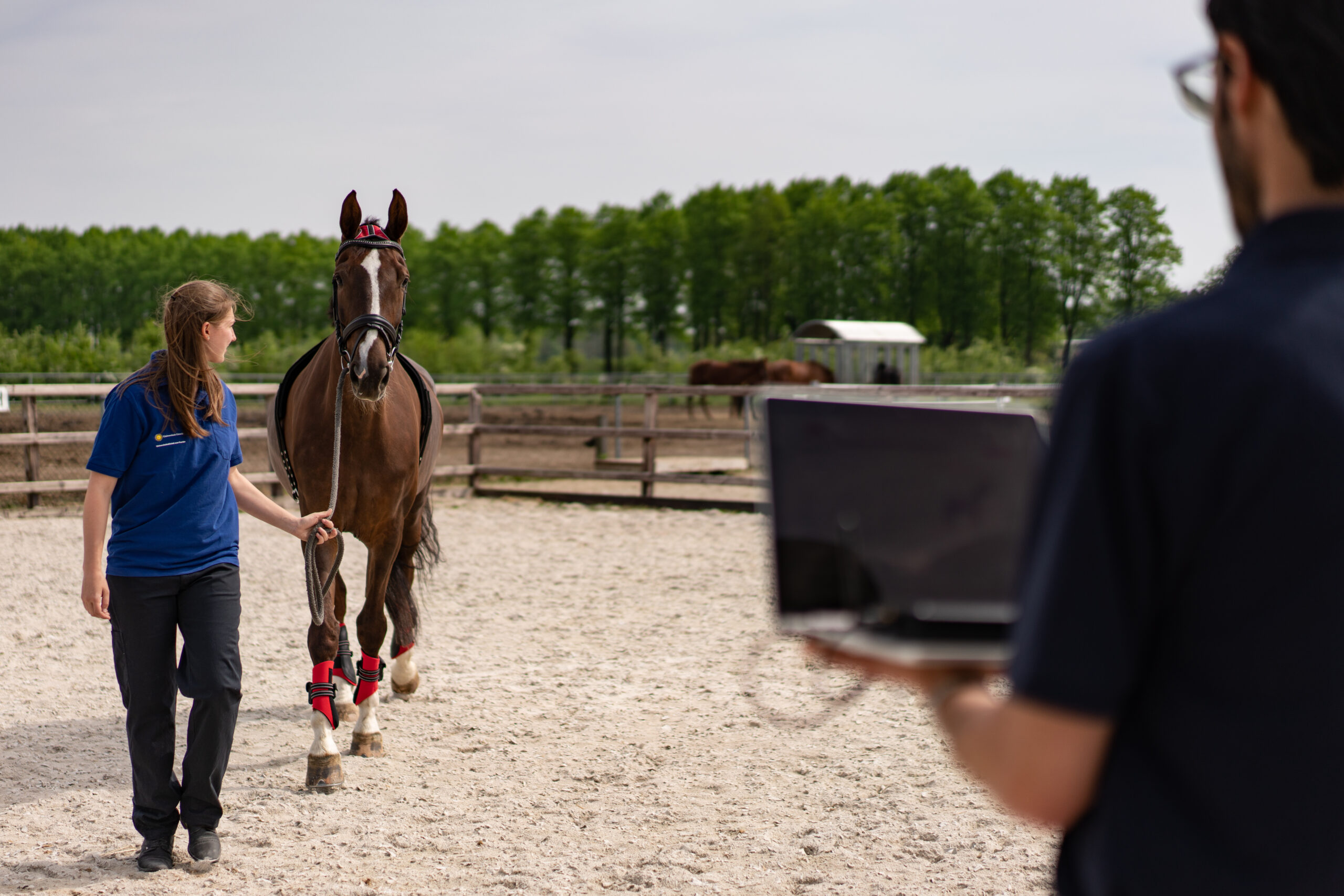 Horse wearing the EquiMoves system